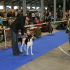 Prague Expo Dog 2014