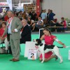 National Specialty Show
